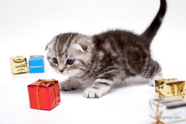 """""""kitten play"""""""