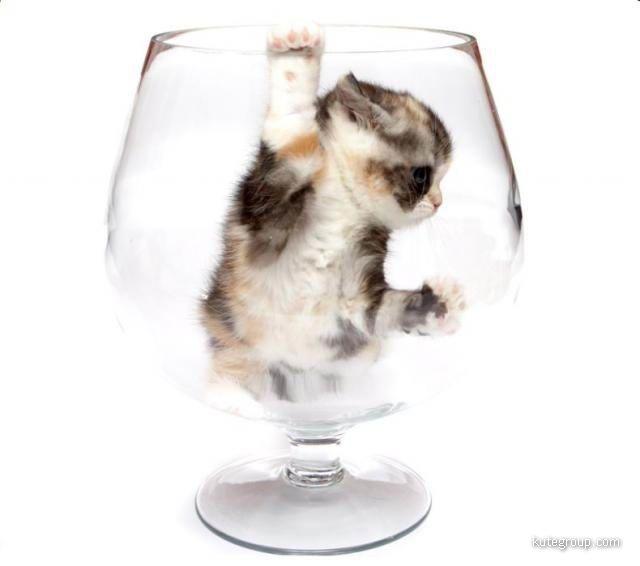 kitten images
