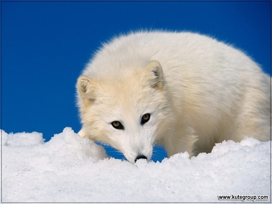 animals photos