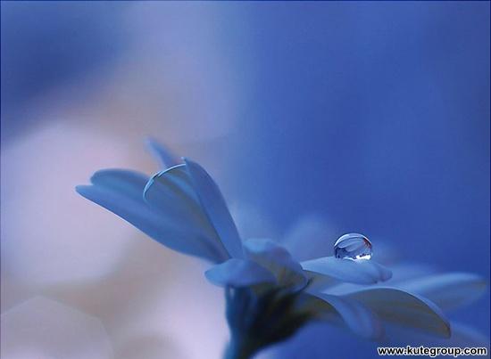 dew flowers