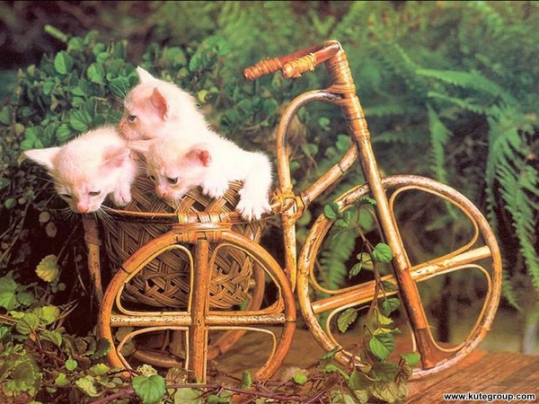 kittens images