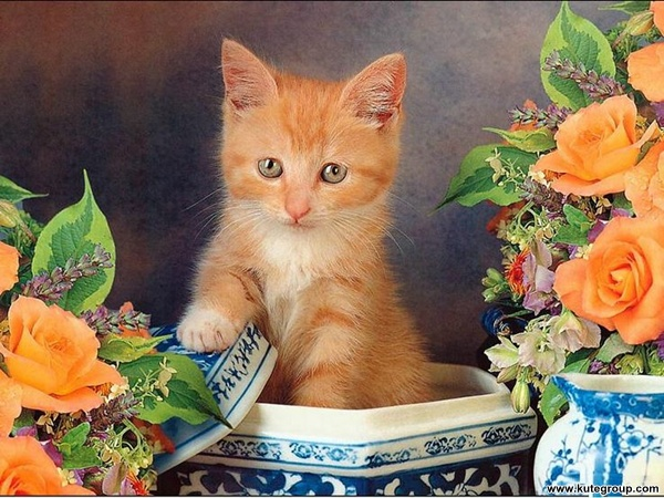kittens photos