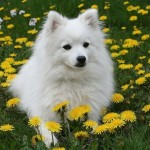 dogs-flower-6