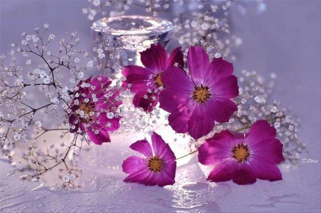 flower photos