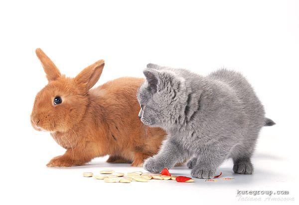 baby kitten pictures