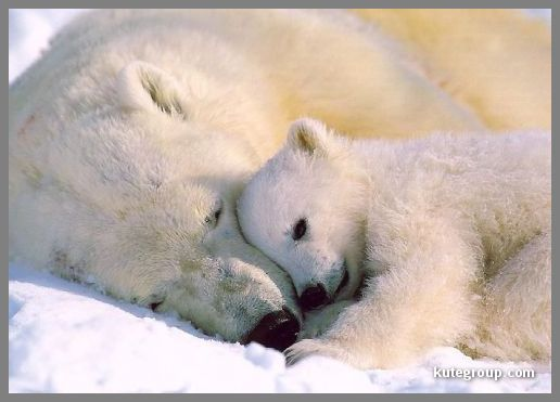 baby animals pictures