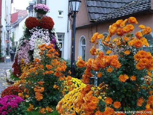 """""""flower festival"""""""