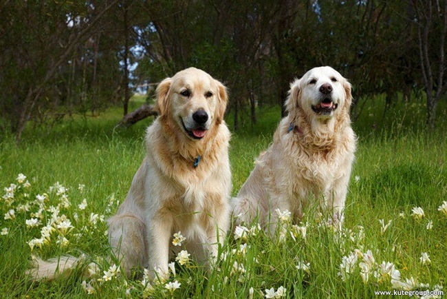 pictures of cute dogs